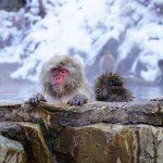 冬が寒ければ寒いほどお風呂が気持ちいいよねって話。